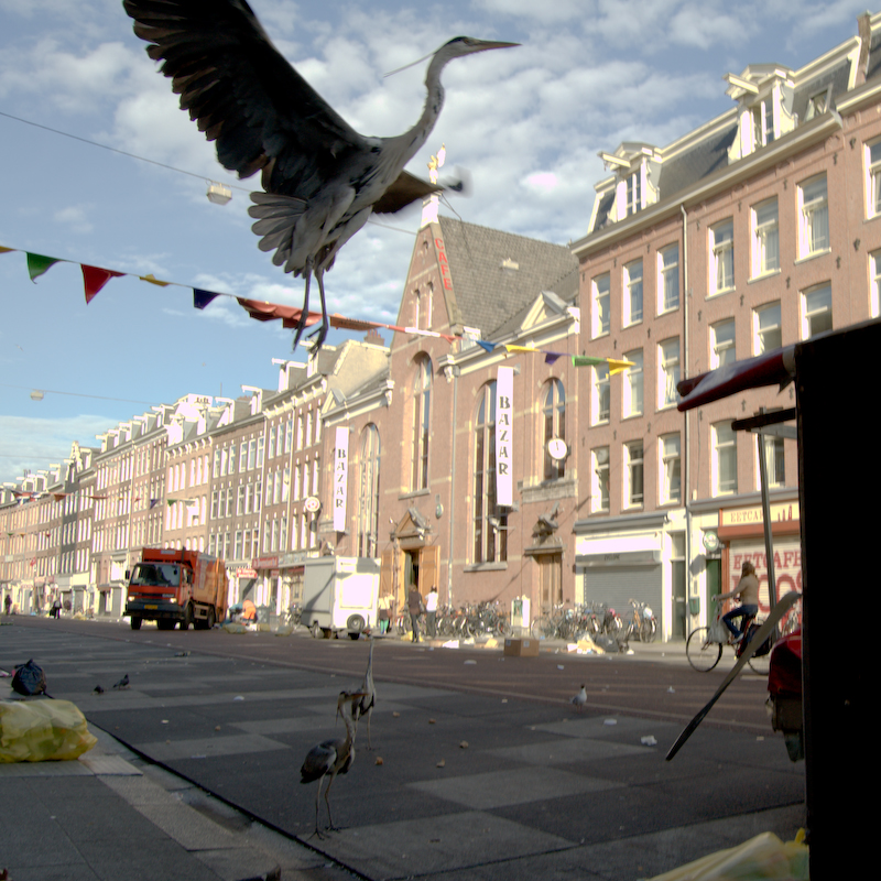 Herons in Albert Cuypmarkt